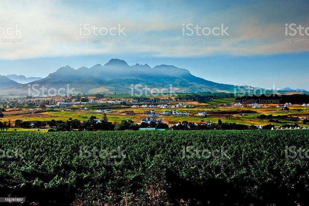 Dawn at a vineyard in Stellenbosch, South Africa stock photo