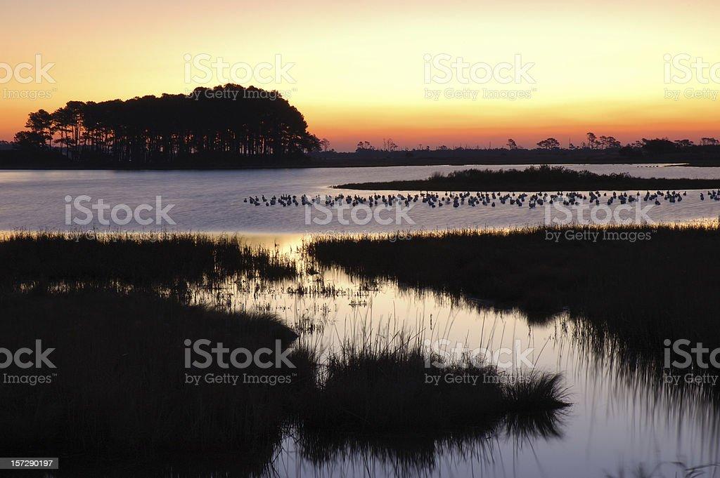 Dawn at Chincoteague Island 4 royalty-free stock photo