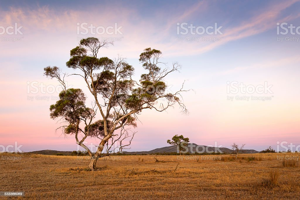 Dawn in Outback South Australia stock photo