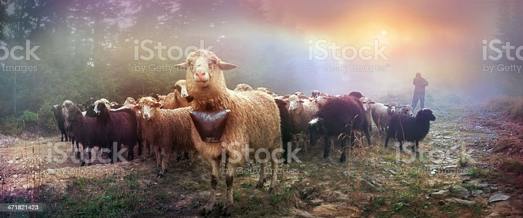 Dawn in the Alps herding royalty-free stock photo