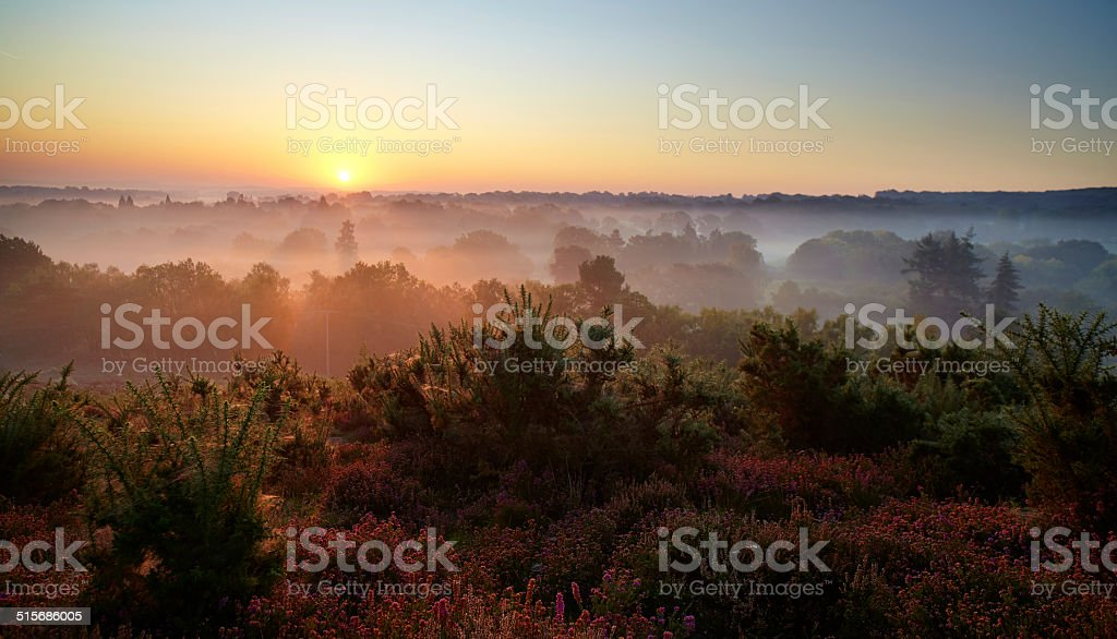 Dawn In The Surrey Hills stock photo
