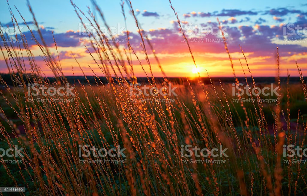 Dawn Light In The Australian Outback stock photo