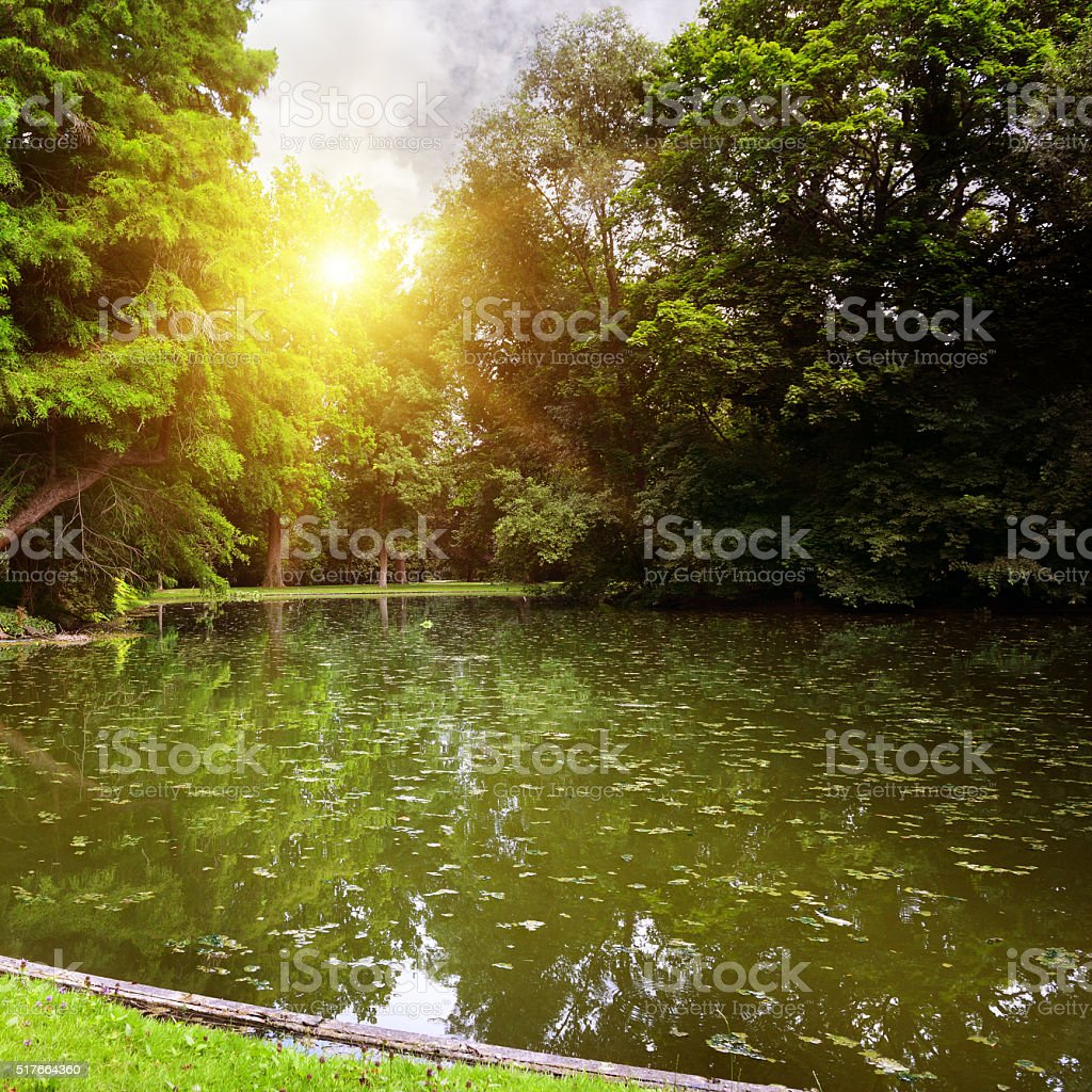 Dawn over small lake in woods stock photo