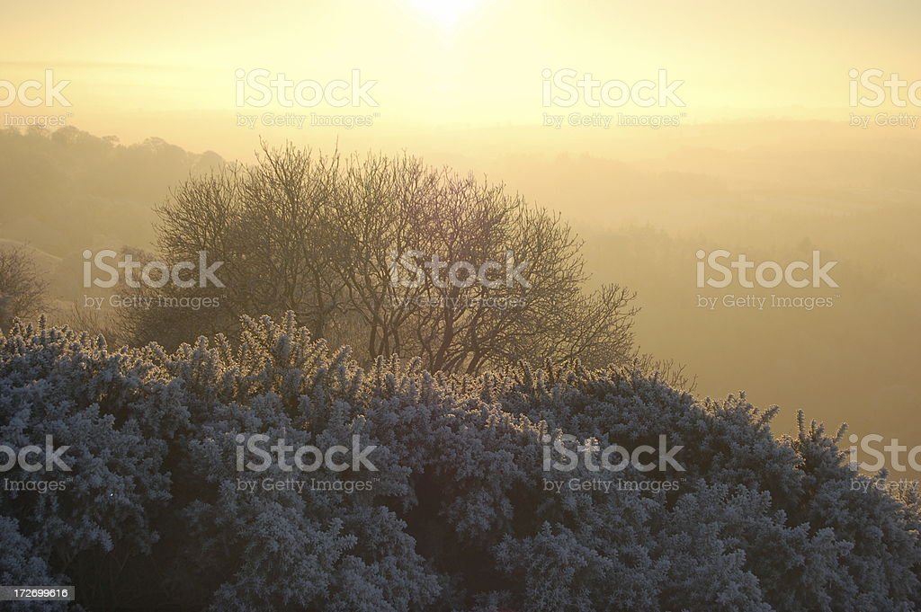 Dawn. stock photo