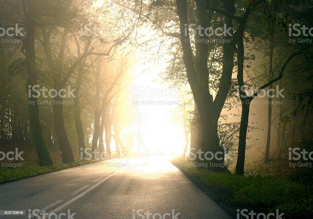 dawn-glare,road, stock photo
