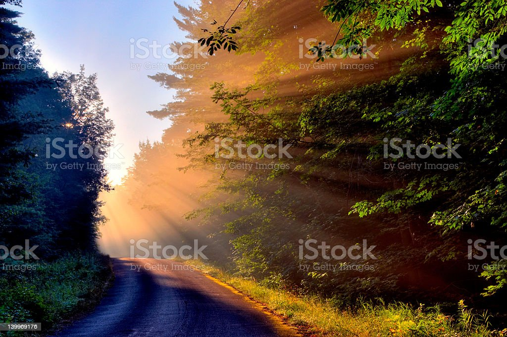 Dawn's Rays Through the Trees #2 royalty-free stock photo
