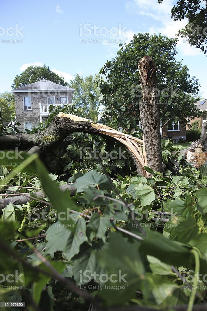 Day after hurricane 'Irene' in Quebec City, Canada stock photo