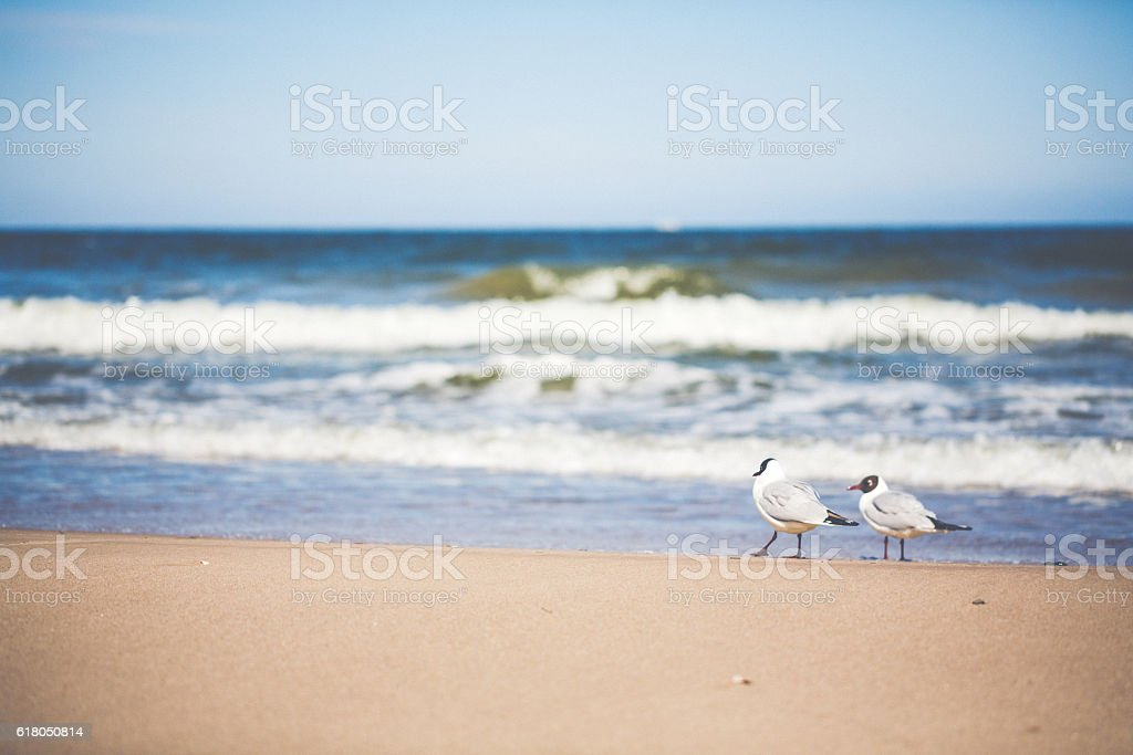 Day at the Baltic Sea with seagull stock photo