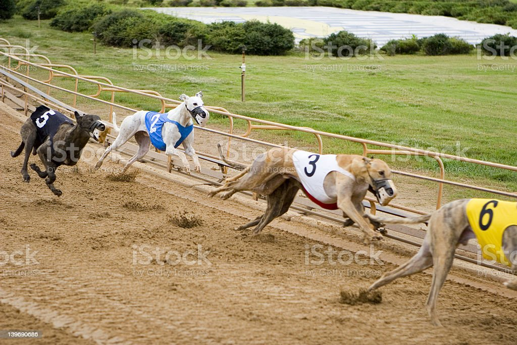Day at the Races royalty-free stock photo