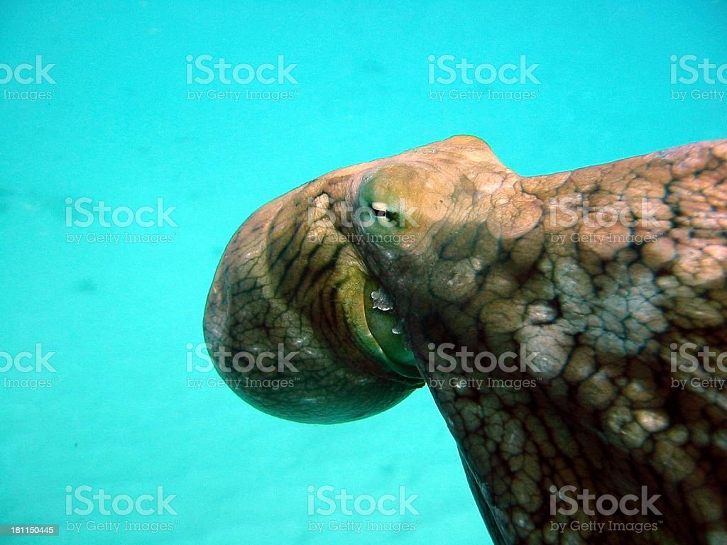 Day Octopus royalty-free stock photo