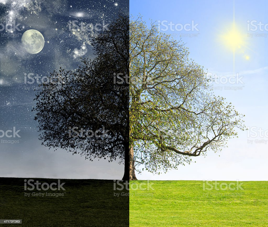 Day vs. night tree concept stock photo