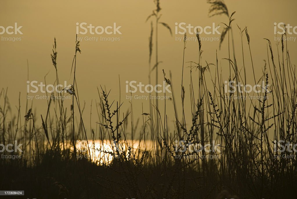 Daybreak royalty-free stock photo