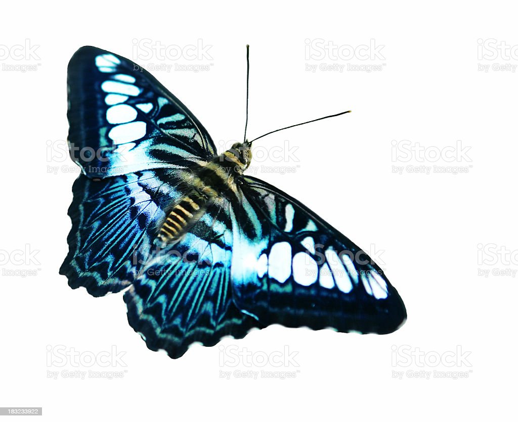 Daydreams of Butterflies stock photo