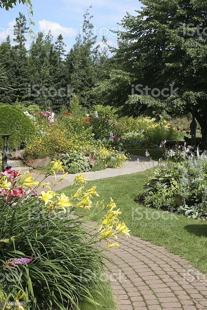 Daylily Garden stock photo