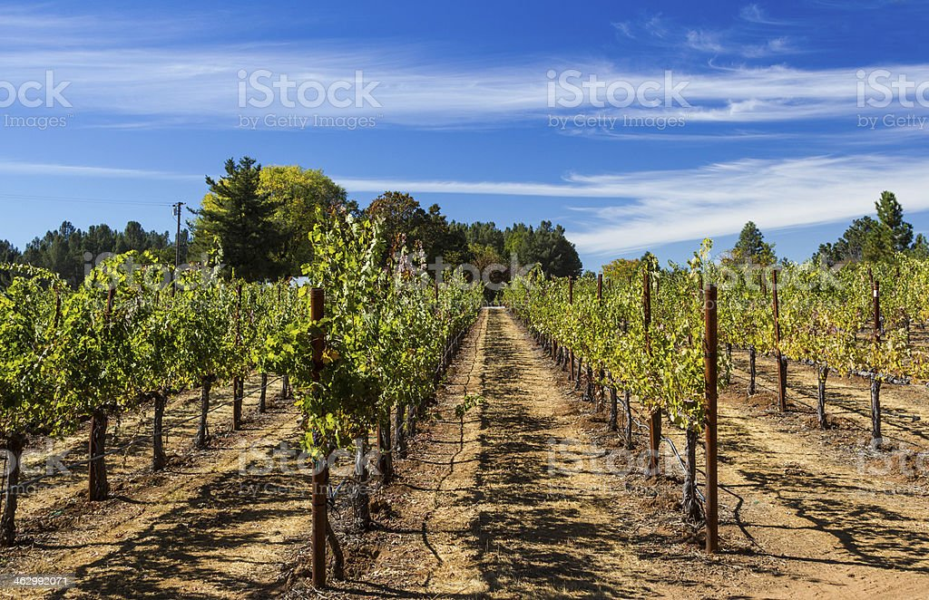 Daytime wine vineyards stock photo