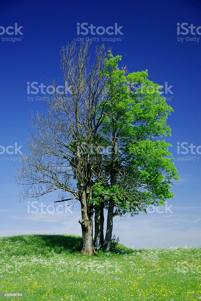 dead and alive stock photo