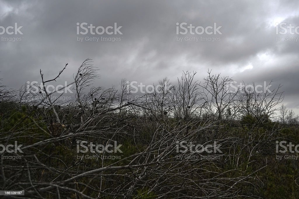 Dead and lonely trees. royalty-free stock photo