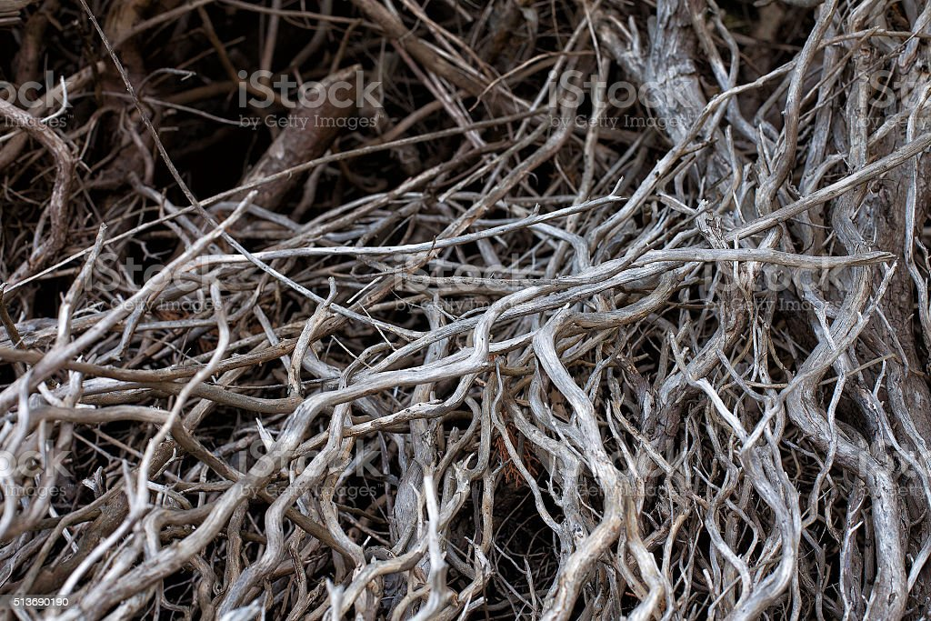 Dead and twisted  tree branches stock photo