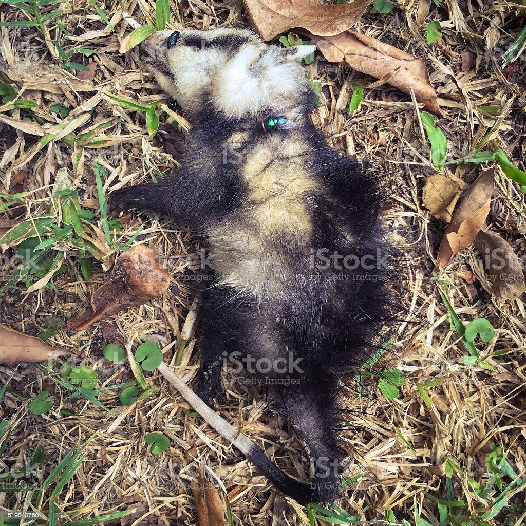 Dead animal stock photo