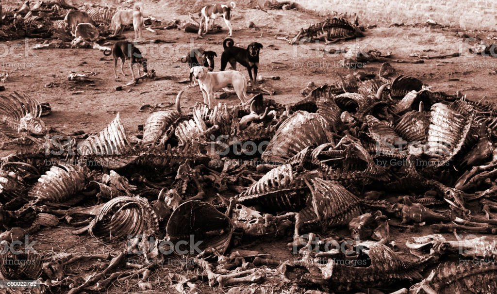 Dead Animals ! stock photo