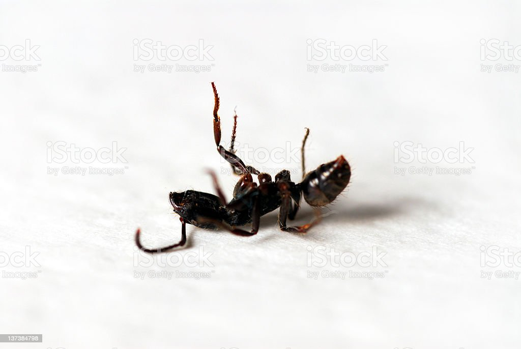Dead ant stock photo