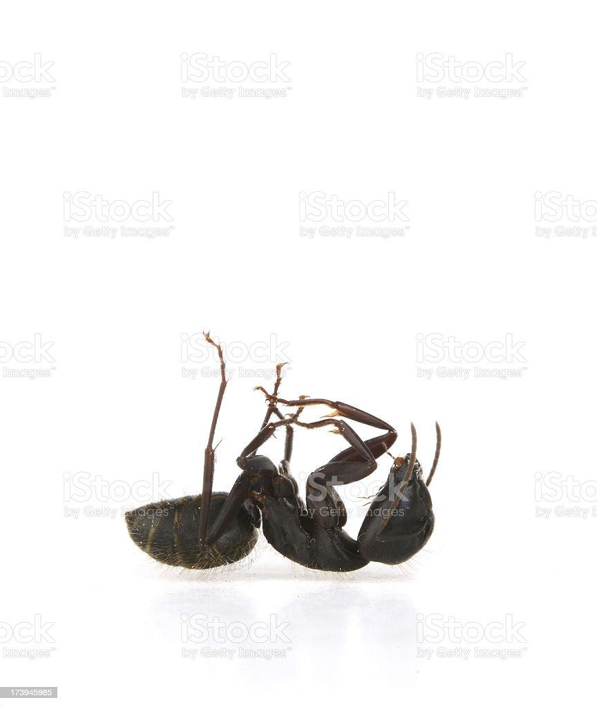 Dead Ant stock photo
