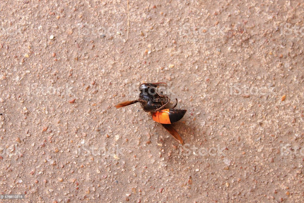 Dead bee with droplet stock photo