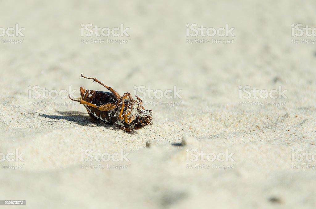 Dead beetle stock photo