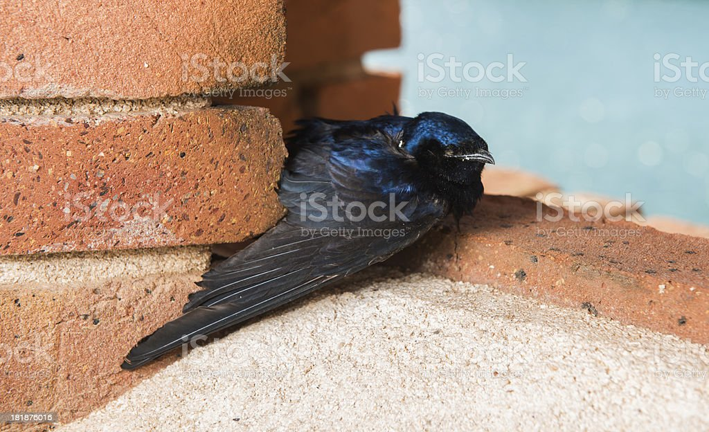 Dead Bird on Brick Ledge stock photo