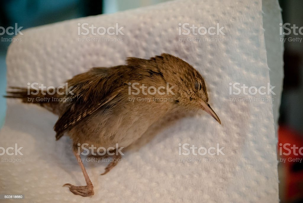 dead bird on napkin stock photo