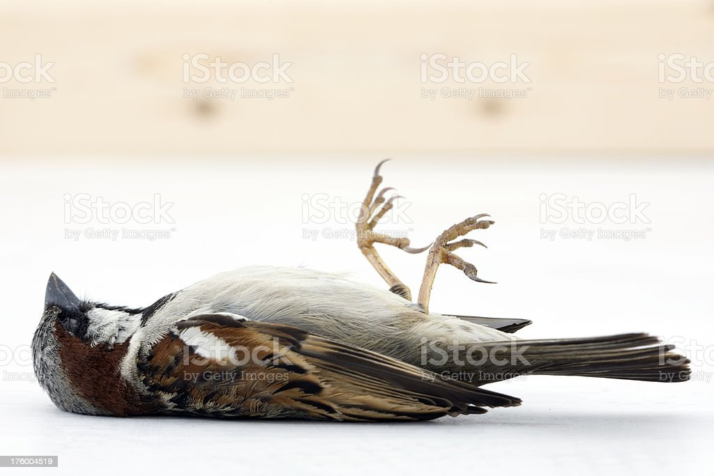 Dead Bird royalty-free stock photo