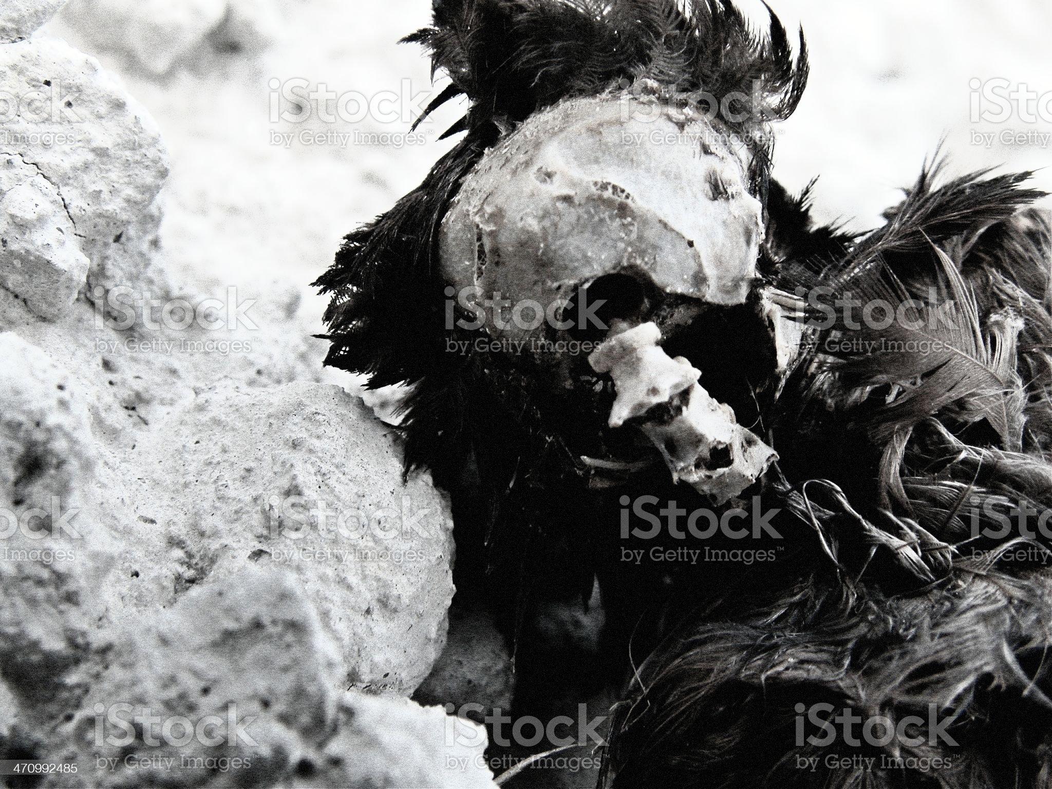 Dead bird skull royalty-free stock photo