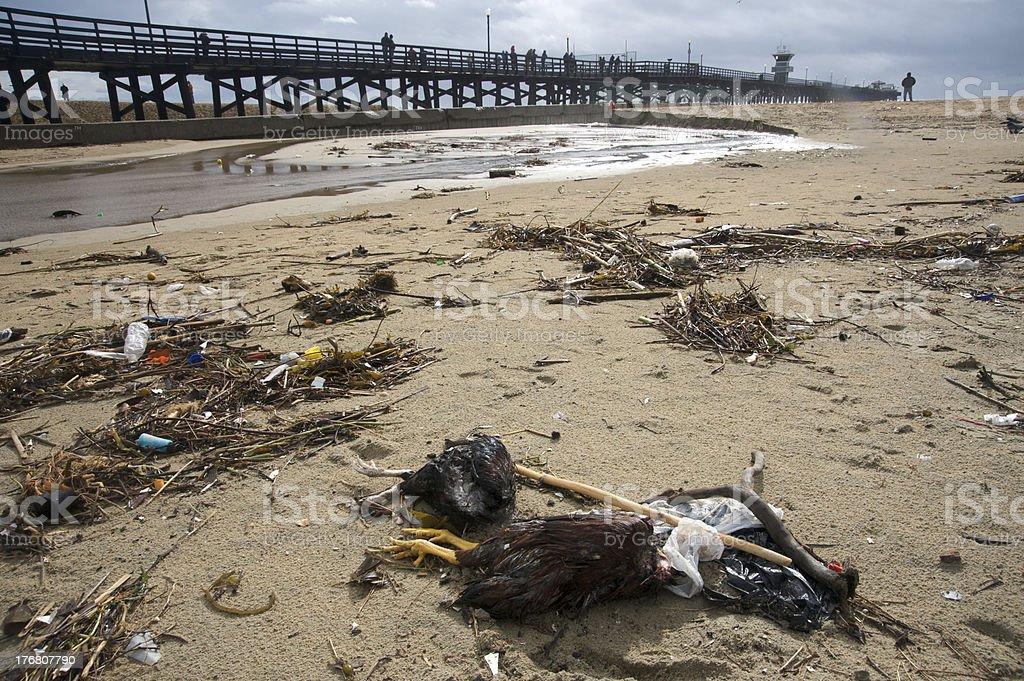 Dead birds on the beach royalty-free stock photo