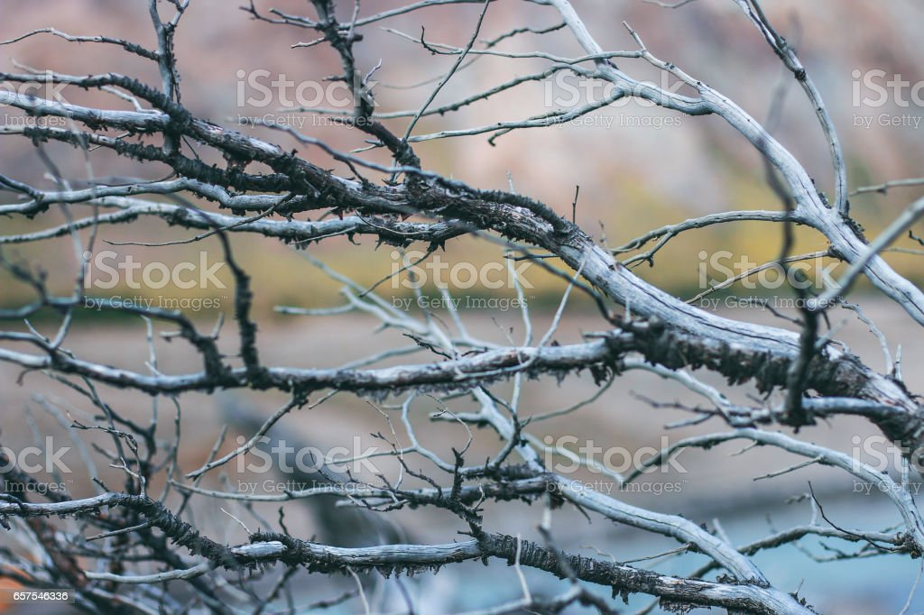 Dead branches background close up stock photo