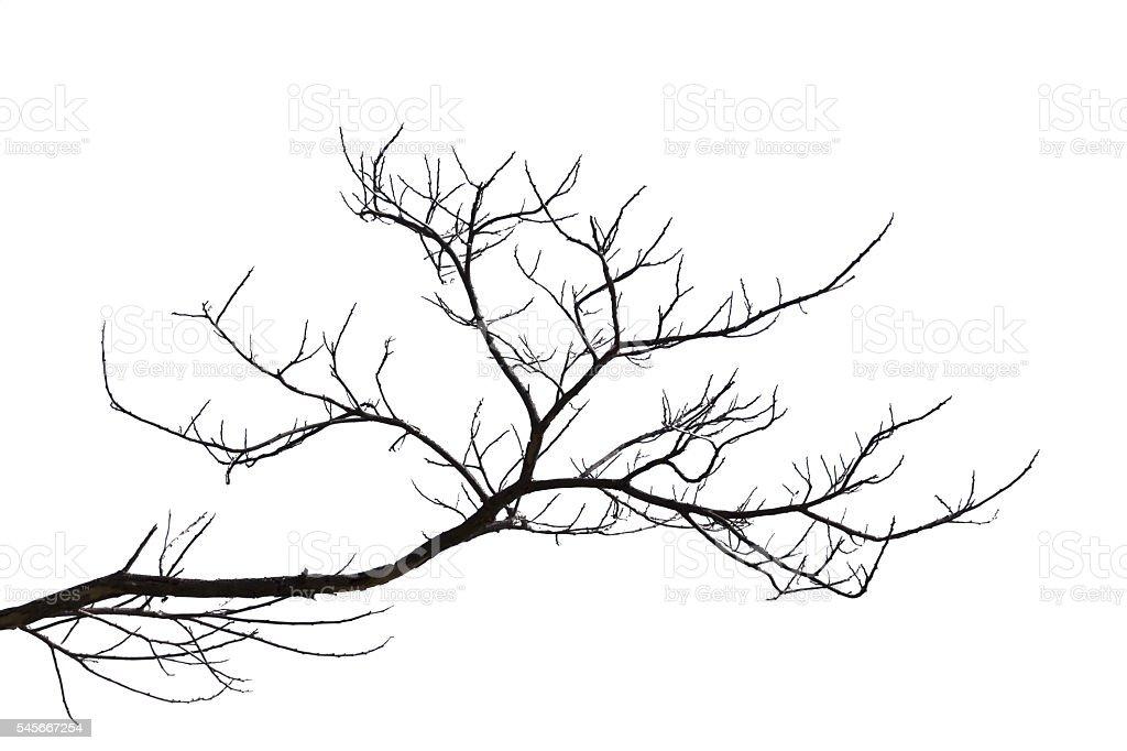 Dead branches. stock photo
