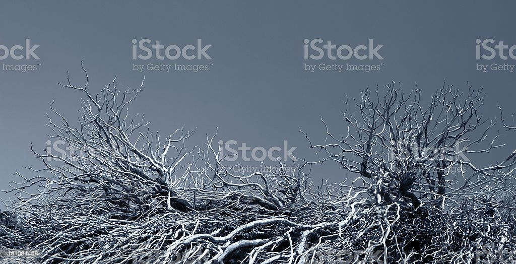 Dead branchs royalty-free stock photo