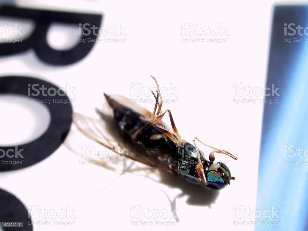 Dead Bug royalty-free stock photo