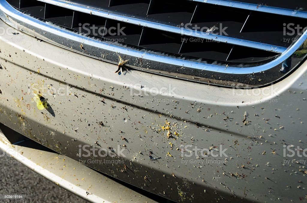 Dead Bugs on a Front Bumper stock photo