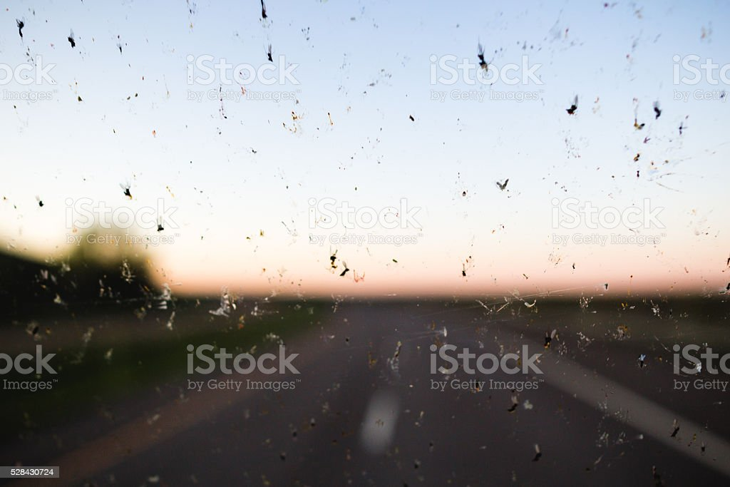 Dead bugs on a windshield stock photo
