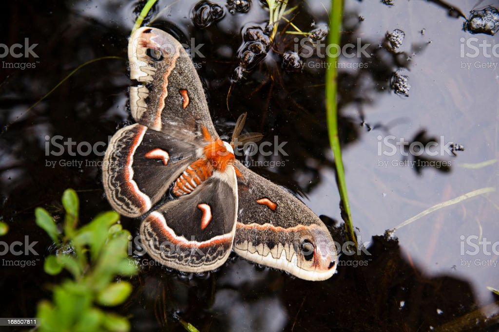dead butterfly in the pond stock photo