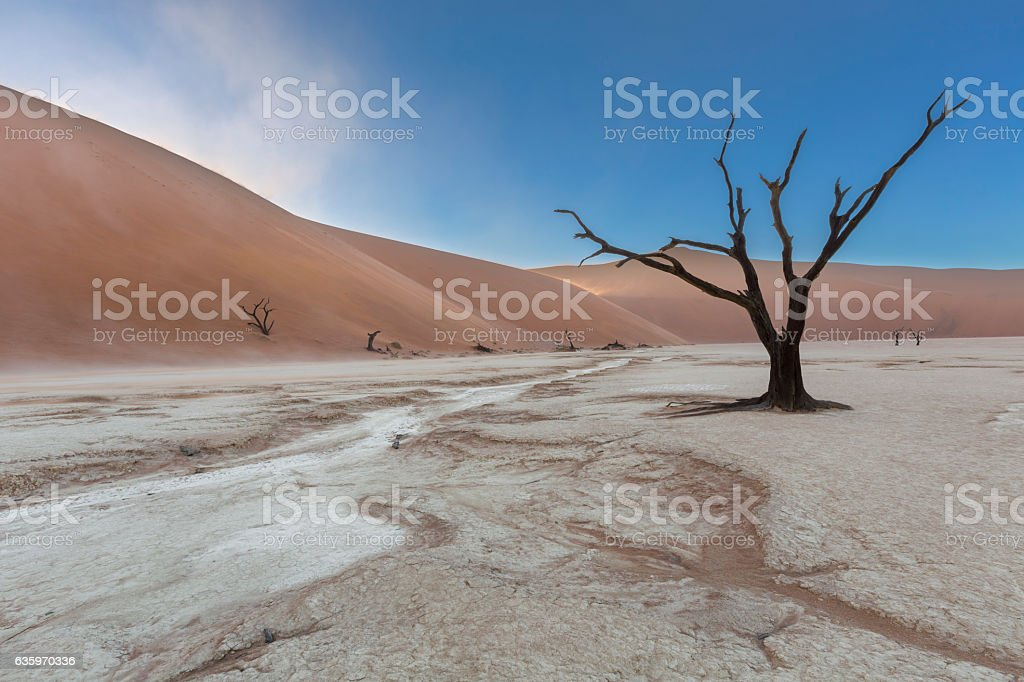 Dead camelthorn tree in Dooievlei stock photo