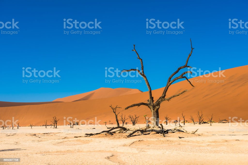 Dead Camelthorn Trees and red dunes in Deadvlei, Namibia stock photo