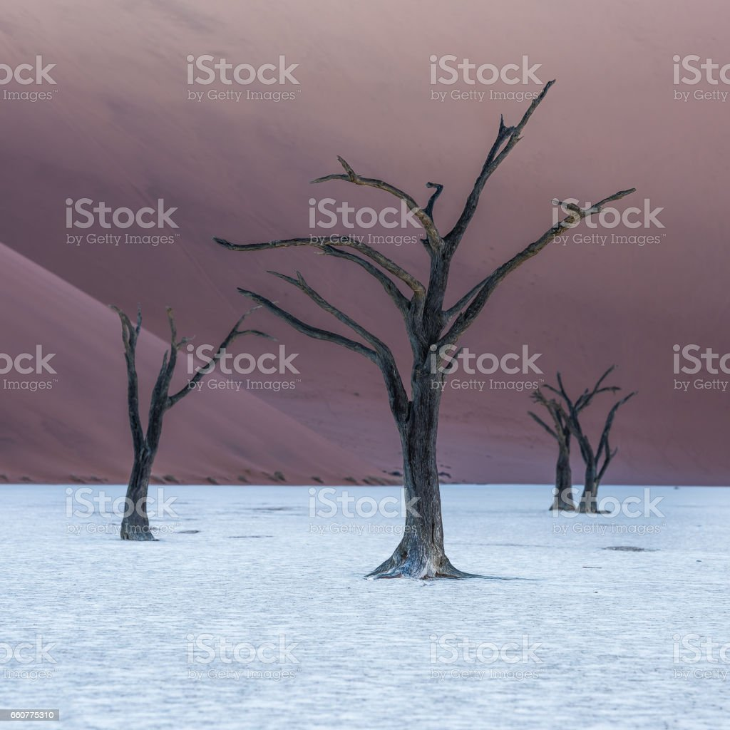Dead Camelthorn Trees and red dunes in Deadvlei stock photo