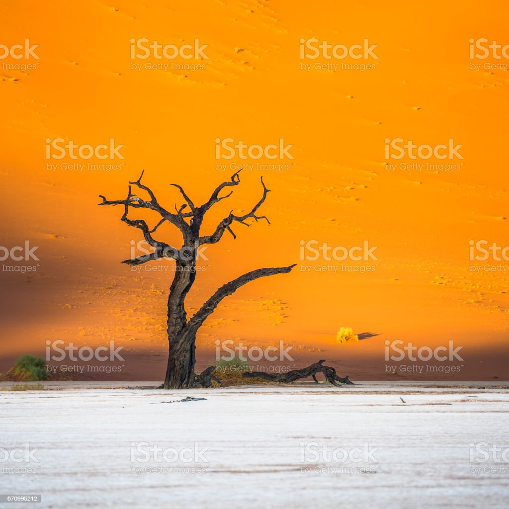 Dead Camelthorn Trees and red dunes in Deadvlei, Sossusvlei, Namib-Naukluft National Park, Namibia stock photo
