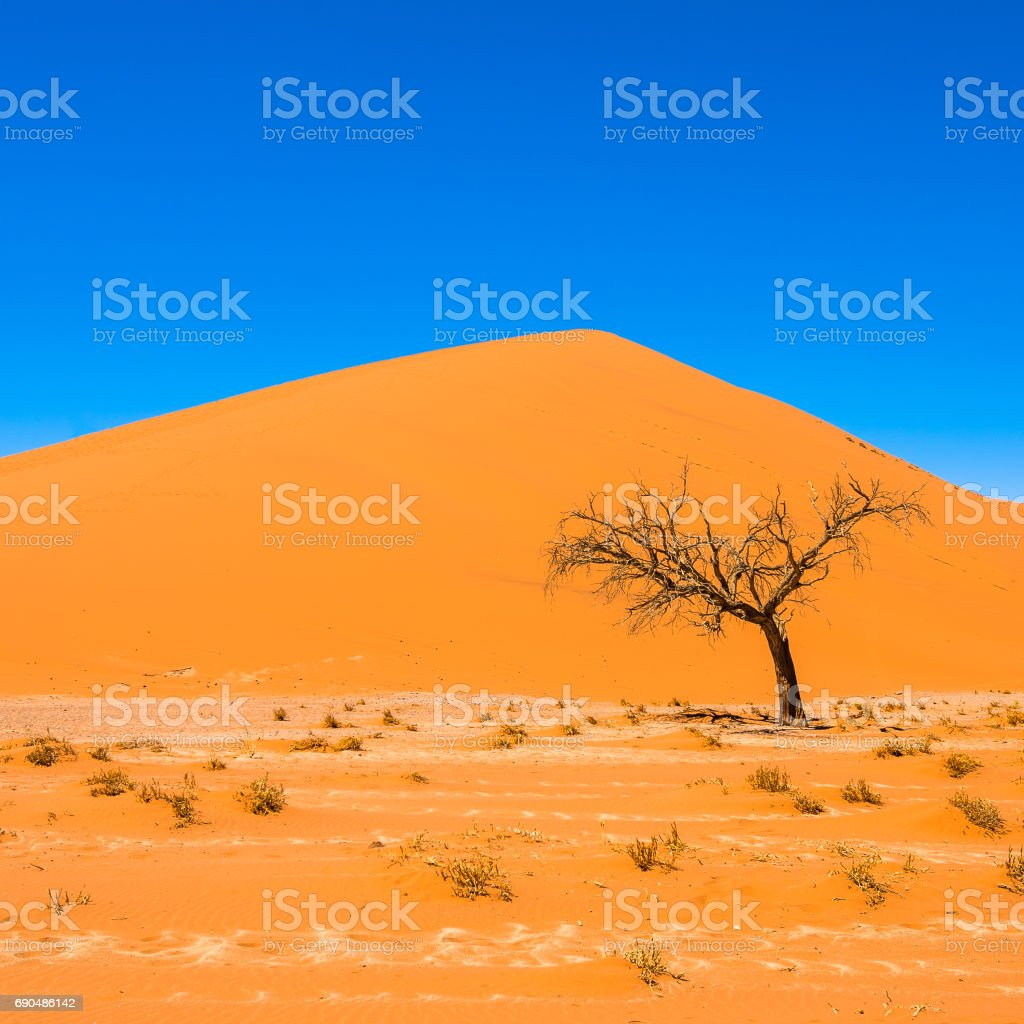 Dead Camelthorn Trees and red dunes in Sossusvlei, Namib-Naukluft National Park, Namibia stock photo