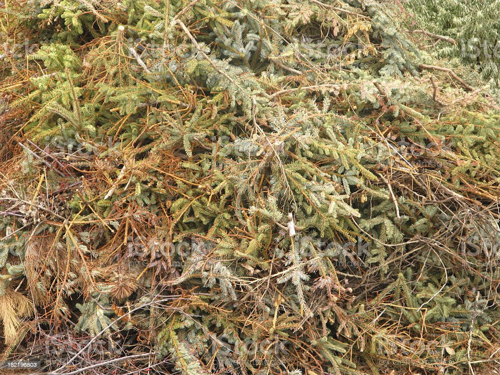 Dead Christmas Trees Compost Mulch royalty-free stock photo
