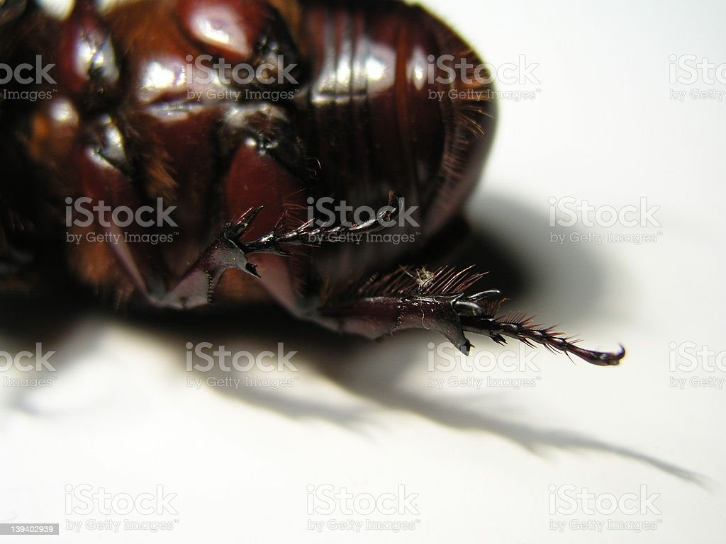 dead cockroach 2 royalty-free stock photo