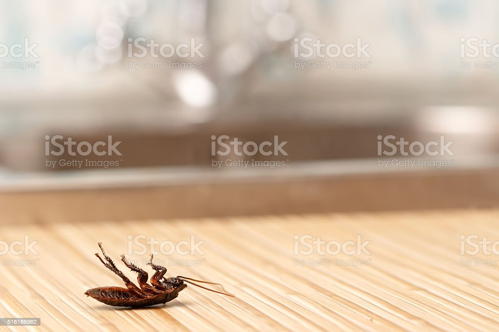 Dead cockroach in apartment house in the kitchen. stock photo