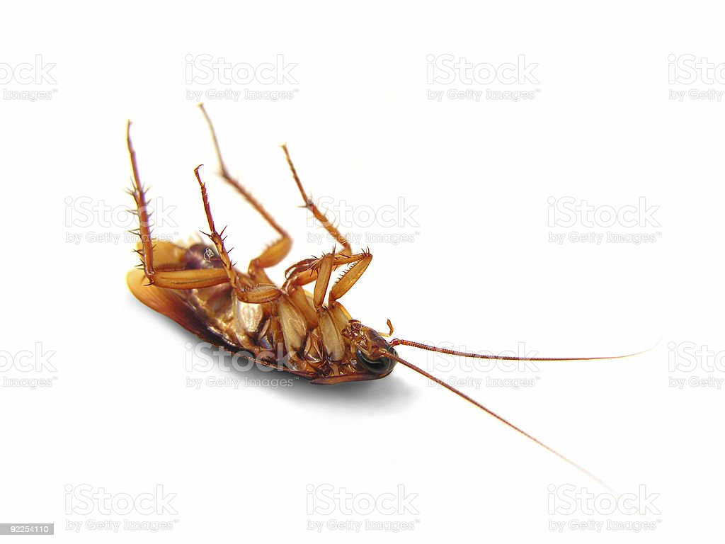 Dead cockroach lying upside down stock photo