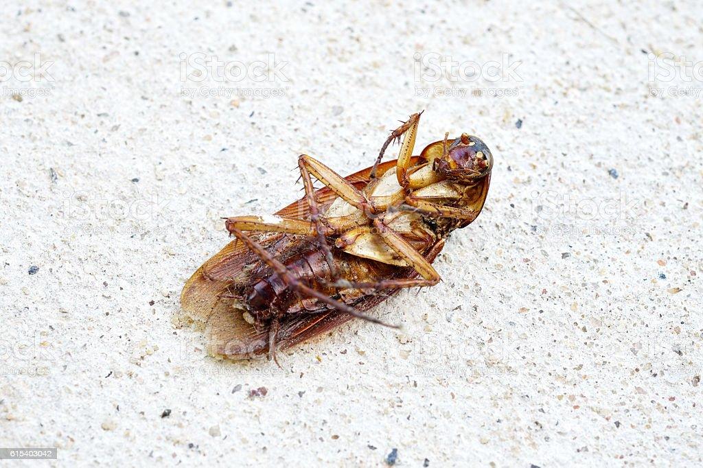 Dead cockroach on cement floor. stock photo